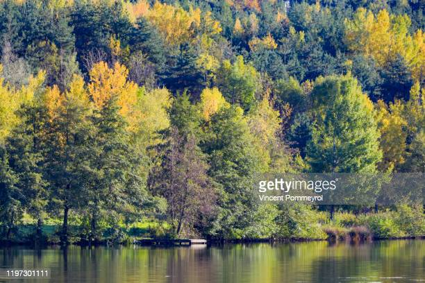 autumn light - hd stock pictures, royalty-free photos & images