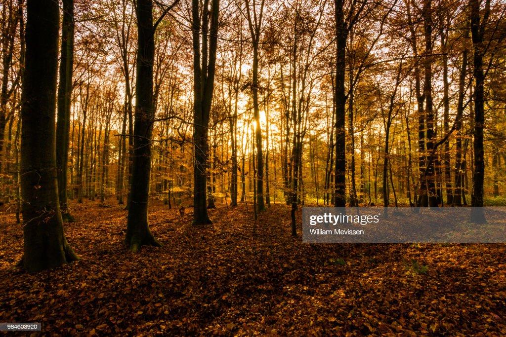 Autumn Light : Stockfoto