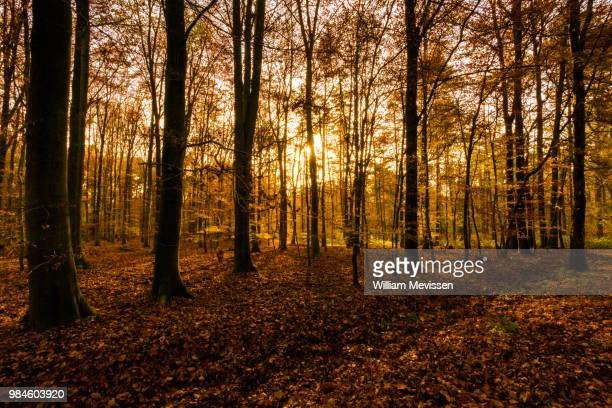 autumn light - william mevissen stockfoto's en -beelden