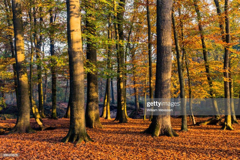 Autumn Light : ストックフォト