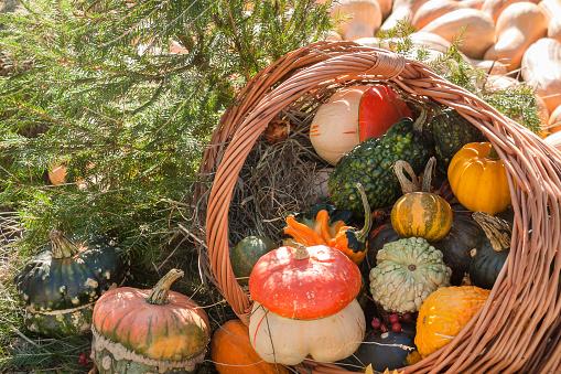 Autumn mabon pumpkin festivale sunny day background 1163197238