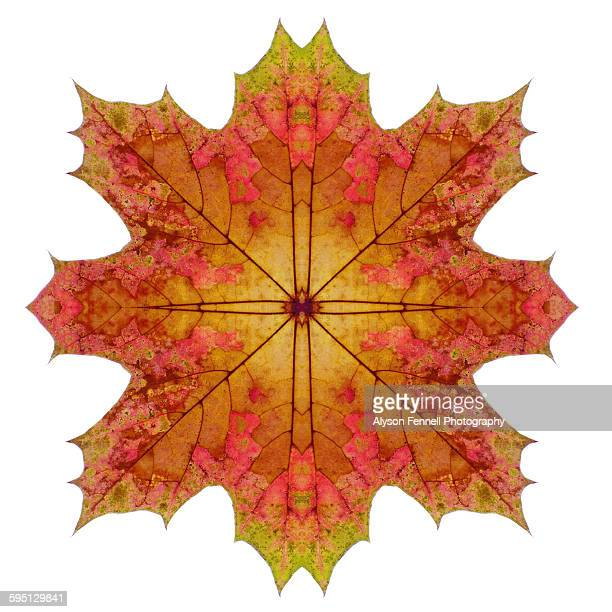 autumn maple leaf star - alyson fennell stock pictures, royalty-free photos & images
