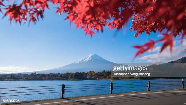 autumn maple leaves mount Fuji