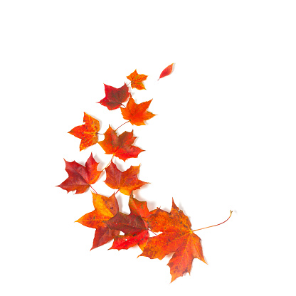 autumn maple leaves over white isolated background - gettyimageskorea