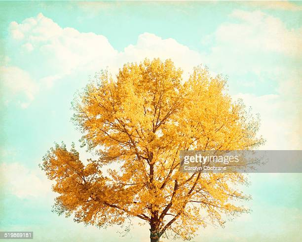 Autumn Maple Tree with Orange Yellow Leaves