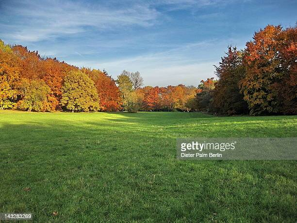 Autumn meadow in garden