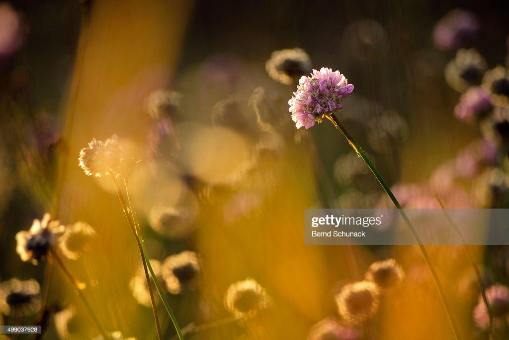 Autumn meadow : Stock-Foto