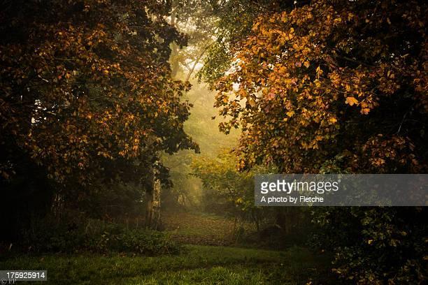 Autumn mist in a woodland glade