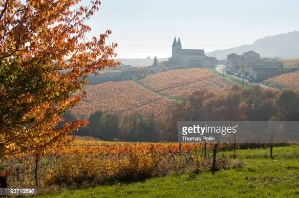 autumn mist in beaujolais vineyard - rhone stock pictures, royalty-free photos & images