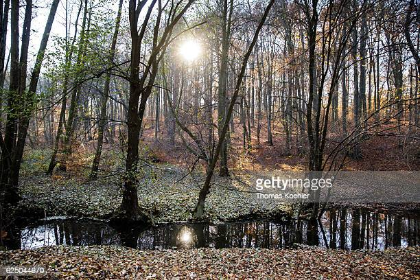 Autumn mood at sunrise in the nature reserve Biesenthaler Becken on November 13 2016 in Biesenthal Germany