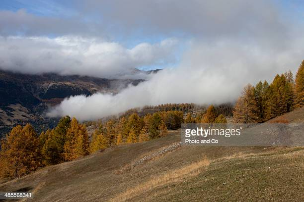 autumn mountain larch Queyras