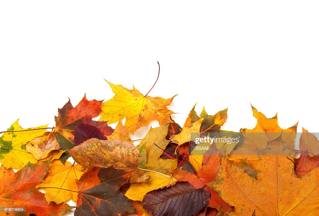 Autumn multicolor leafs : Stock Photo