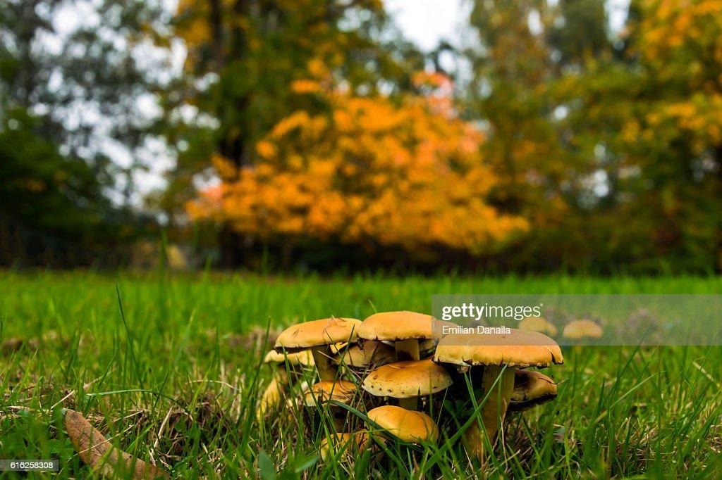 Outono de cogumelos : Foto de stock