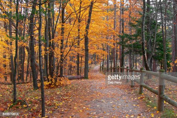 autumn natural trail - traverse city fotografías e imágenes de stock