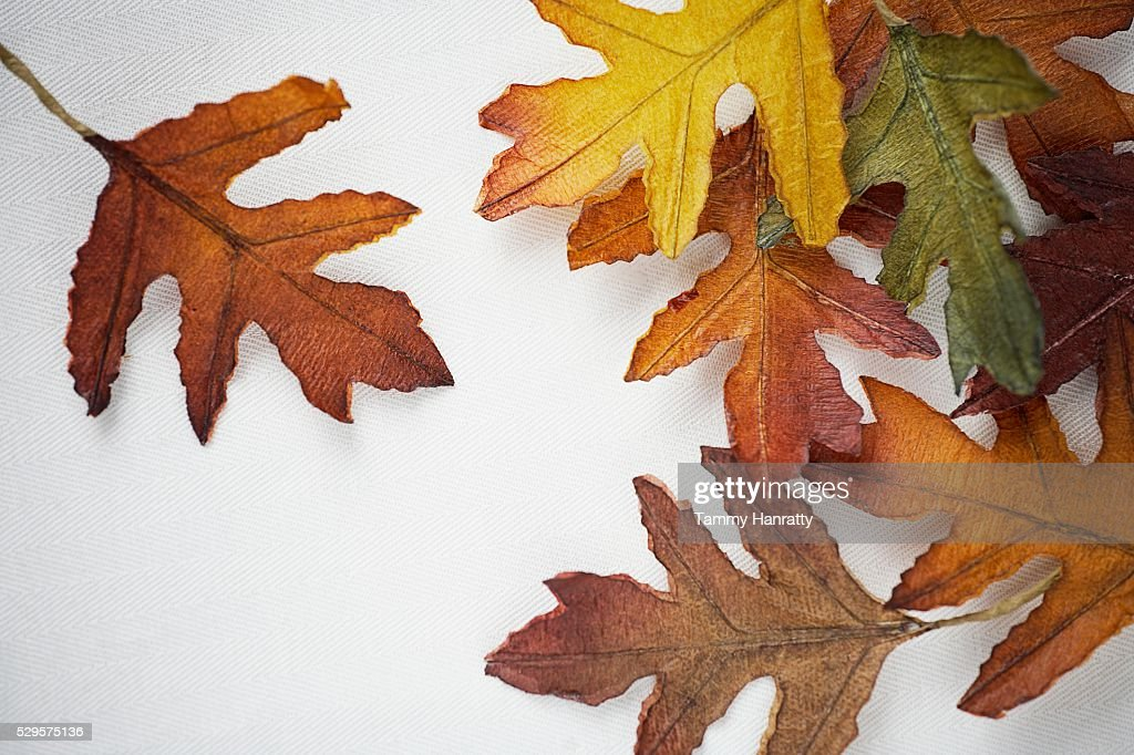 Autumn Oak Leaves : Stock Photo