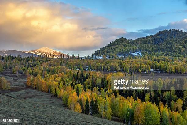 Autumn of Hemu village in Kanas Nature Reserve, Xinjiang, China