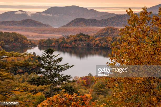 autumn oku-nikko in early morning - isogawyi stock pictures, royalty-free photos & images
