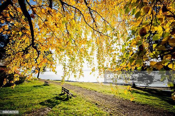 Autumn on a bench