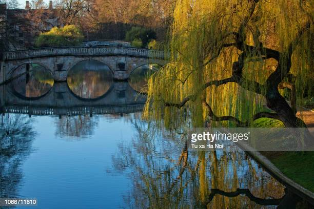 autumn on river cam, cambridge - cambridge university stock pictures, royalty-free photos & images