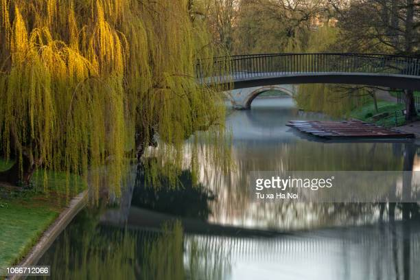 autumn on river cam, cambridge - cambridge cambridgeshire imagens e fotografias de stock