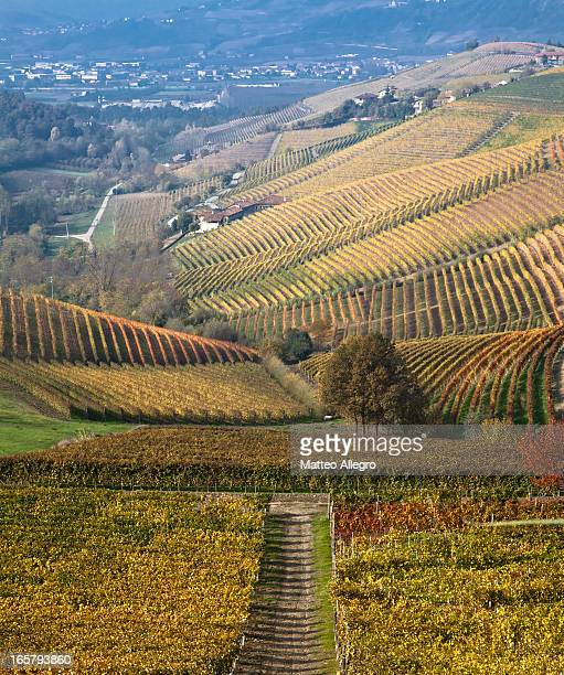 Autumn on the hills of Langhe and Monferrato