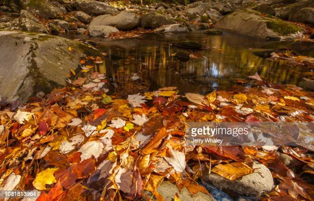 autumn on the little pigeon river - jerry whaley stock pictures, royalty-free photos & images