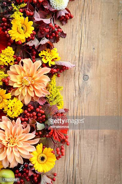 autumn ornament - september stock pictures, royalty-free photos & images