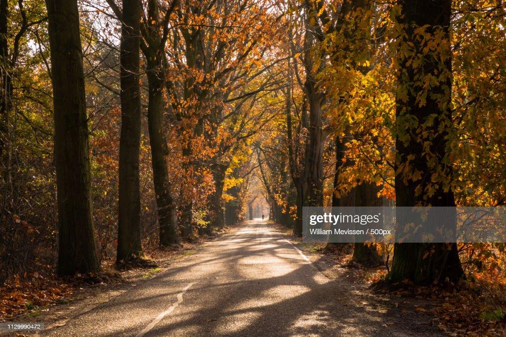 Autumn Oude Baan Nieuw Bergen : Stockfoto