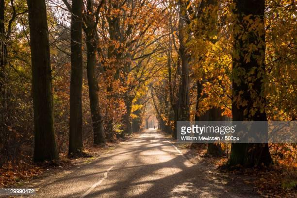 autumn oude baan nieuw bergen - william mevissen stockfoto's en -beelden