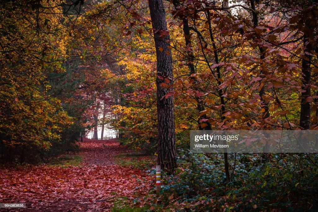 Autumn Palette I : Stockfoto