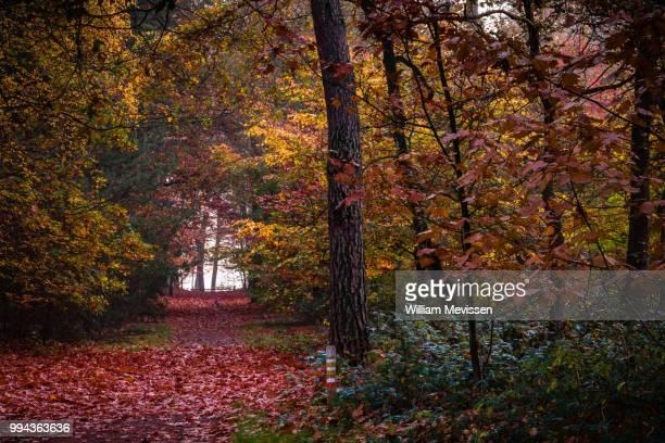 autumn palette i - william mevissen imagens e fotografias de stock