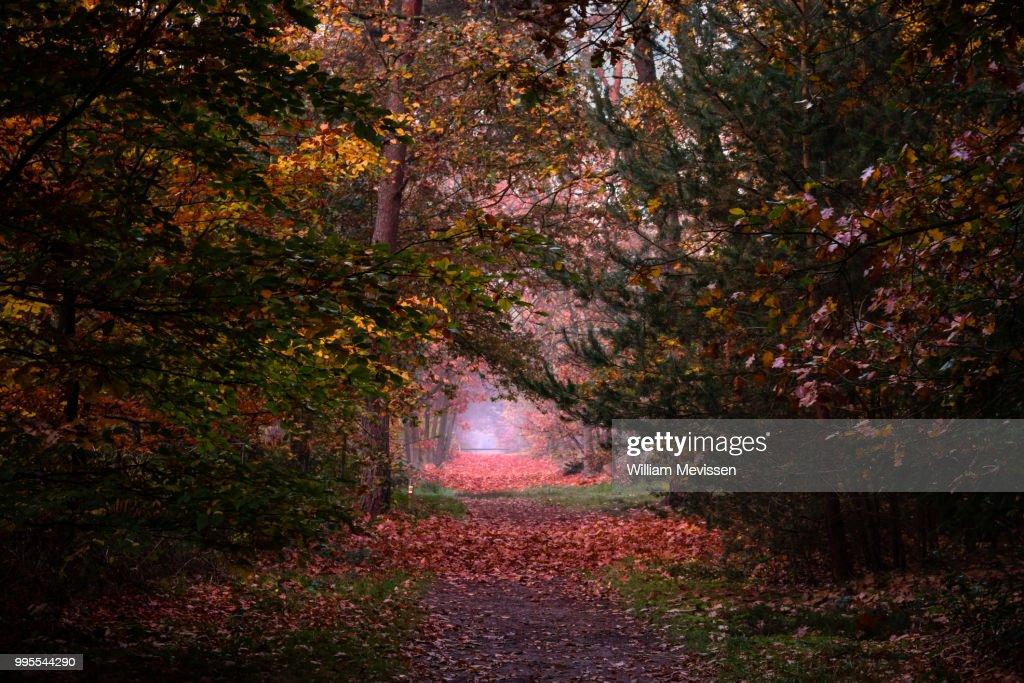 Autumn Palette II : Stockfoto