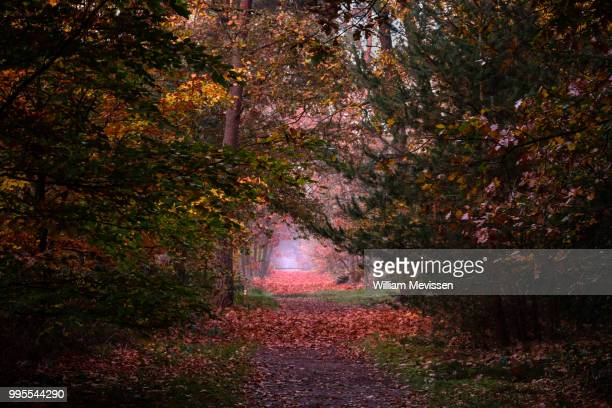 autumn palette ii - william mevissen stock pictures, royalty-free photos & images