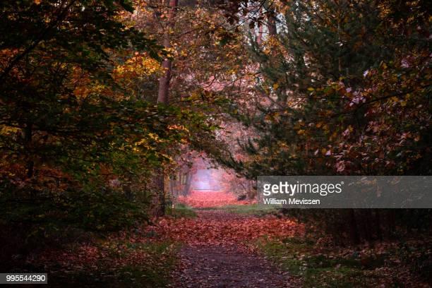 autumn palette ii - william mevissen imagens e fotografias de stock