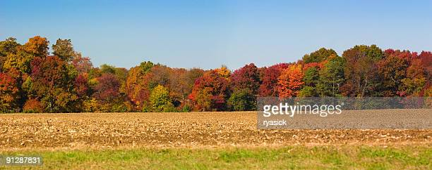 Autumn Panoramic Tree Line Along Cornfield Against Clear Blue Sky