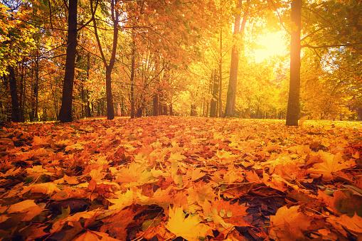 Autumn park. Autumn forest. 1053614486