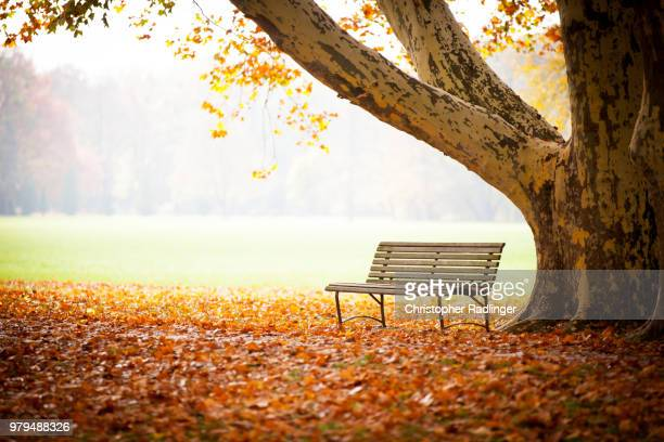 autumn park bank - park bench stock pictures, royalty-free photos & images
