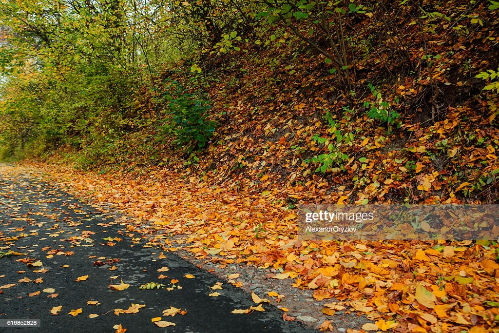 autumn park in the day : Stock Photo