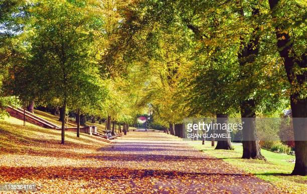 autumn park path - アベニュー ストックフォトと画像