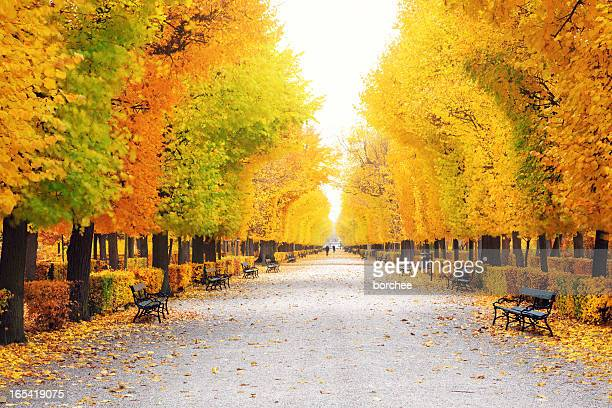 autumn park - vienna austria stock pictures, royalty-free photos & images