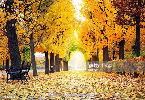 autumn park - avenue stock pictures, royalty-free photos & images