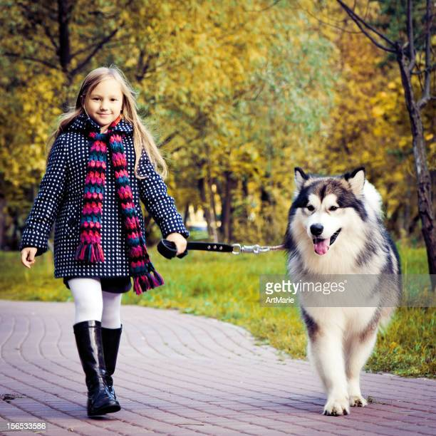 autumn park scene - malamute stock pictures, royalty-free photos & images