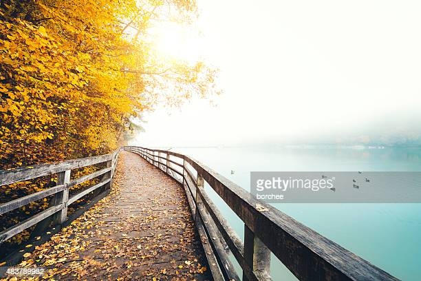 autumn path along the lake - duck bird stock photos and pictures