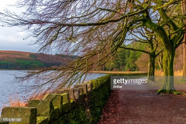 autumn path around a lake - bare tree stock pictures, royalty-free photos & images