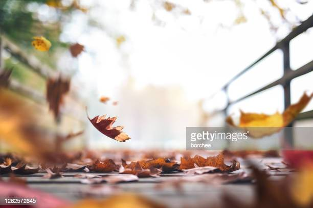 autumn path full of leaves - autumn stock pictures, royalty-free photos & images
