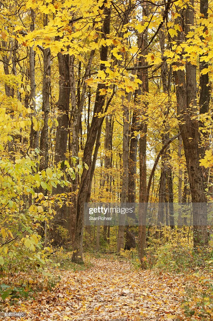 Autumn Path in Woods. Yellow Springs, Ohio : Stock Photo