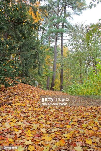 autumn path - wellesley massachusetts stock pictures, royalty-free photos & images