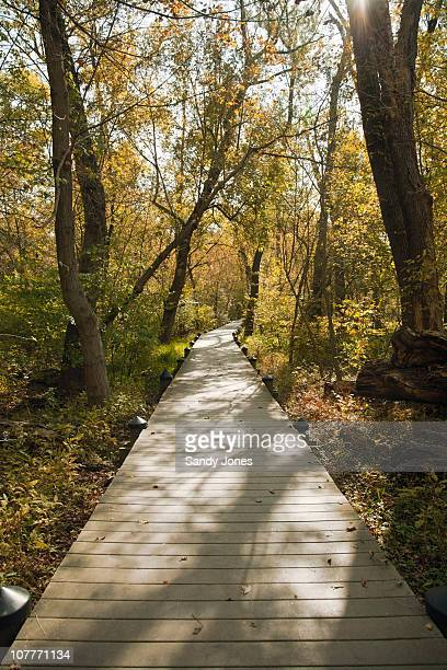 autumn path - arlington virginia stock pictures, royalty-free photos & images