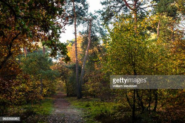 autumn path - william mevissen stock pictures, royalty-free photos & images