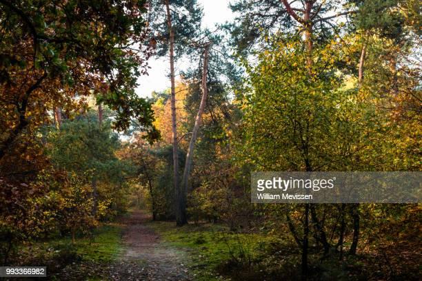 autumn path - william mevissen imagens e fotografias de stock